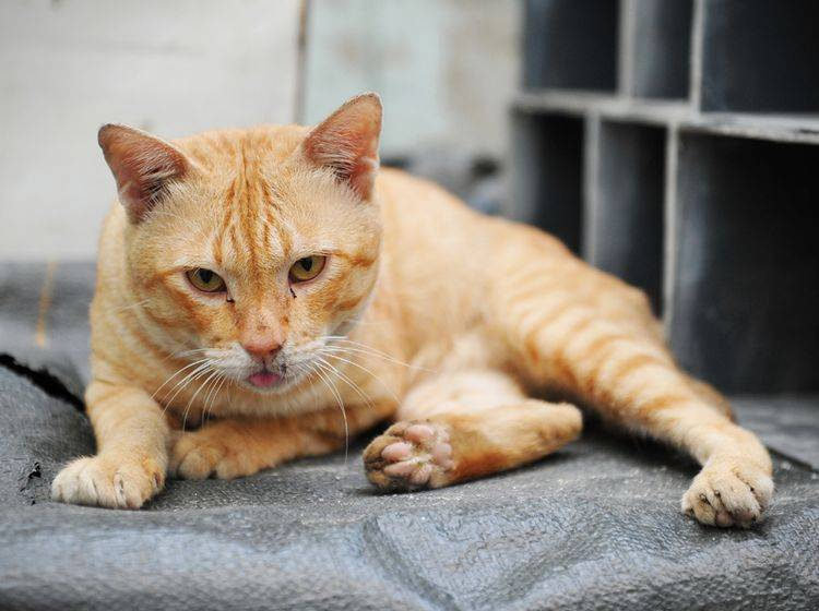 Katze Verschwunden Ursachen