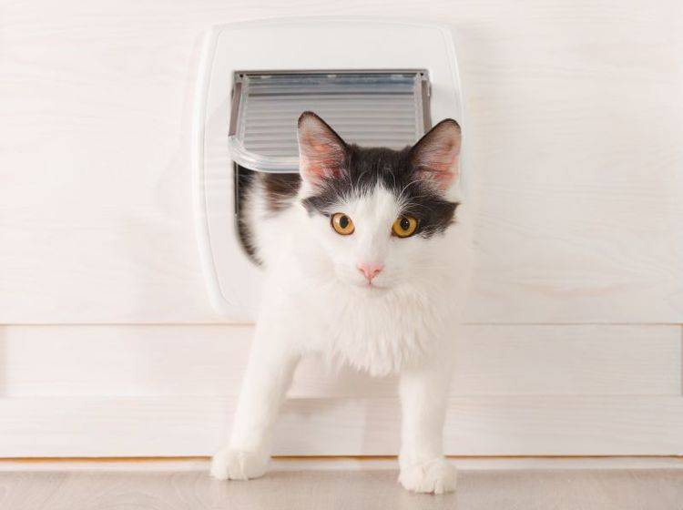 Dank Katzenklappe kann die Miez ein- und ausgehen, wie sie möchte – Shutterstock / Monika Wisniewska
