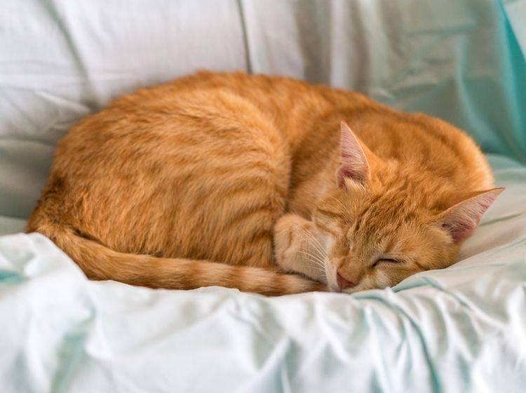 Eine blinde Katze kann ein schönes, erfülltes Leben haben – Shutterstock / Aurelio Wieser