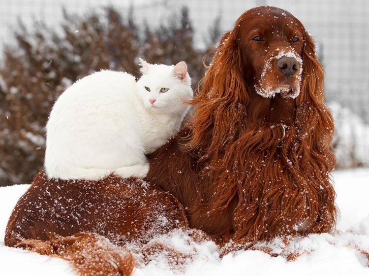 Können Hunde, Katzen und andere Tiere die Zukunft voraussagen? – Shutterstock / DragoNika
