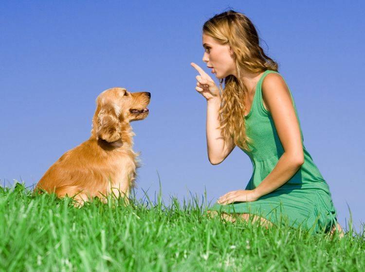 Taube Hunde lassen sich sehr gut mit Zeichensprache erziehen. – Bild: Shutterstock / MANDY GODBEHEAR