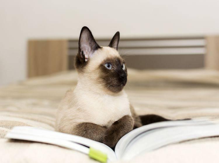 Katzen sind äußerst schlau, punkten jedoch nicht in Sachen Empathie – Shutterstock / Lucy Jovanovic