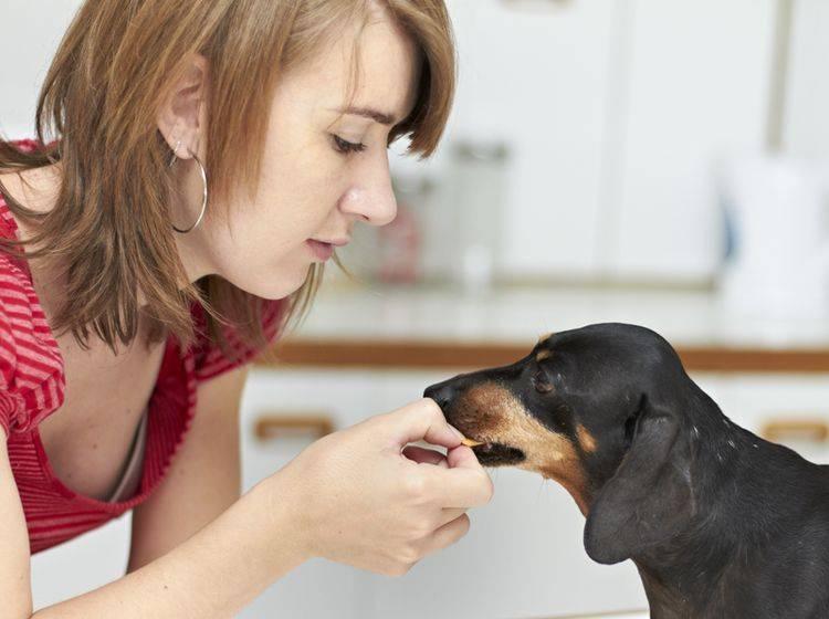 Beim Anti-Giftköder-Training ist Fingerspitzengefühl gefragt – Shutterstock / dogboxstudio