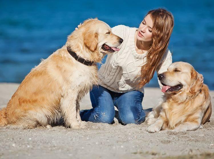 Auf Worte reagieren Hunde nicht, aber auf den Tonfall Ihrer Stimme – Shutterstock / Nina Buday