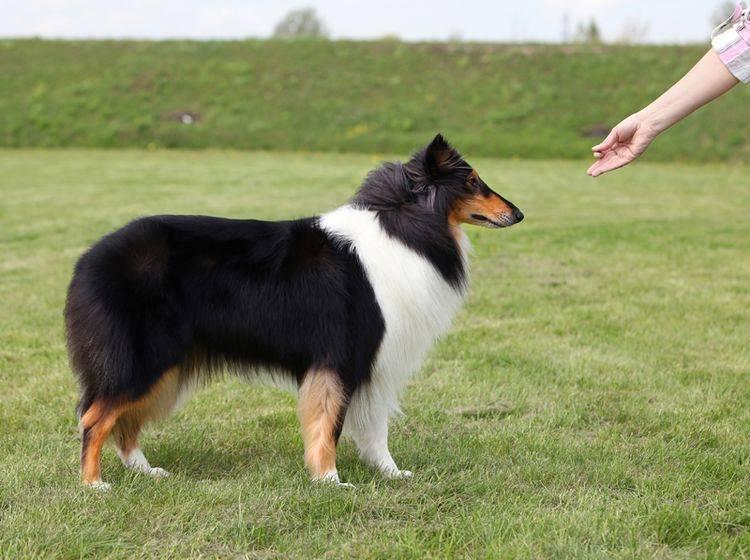 Professionelle Unterstützung zum Anti-Giftköder-Training finden Sie in der Hundeschule – Shutterstock / mdmmikle