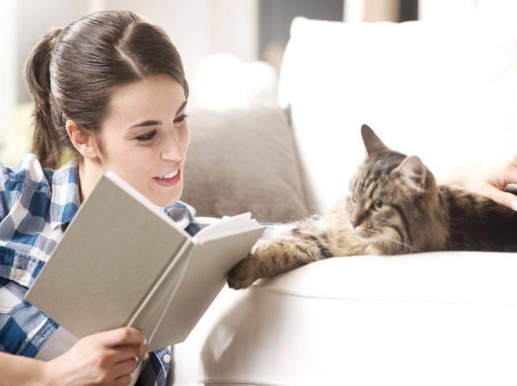 Mit einer Katze daheim wird es nie langweilig – Shutterstock / Stokkete