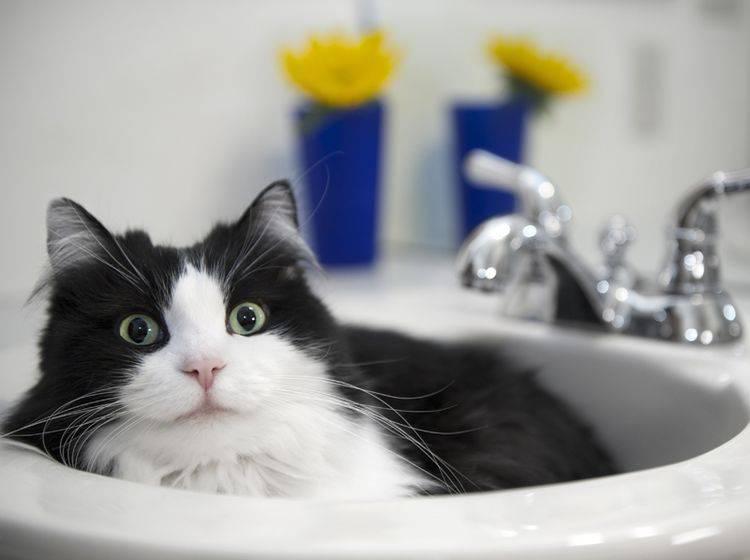 """Katze im Badezimmer: """"Ich schau dir in die Augen, Kleines!"""" – Shutterstock / BoulderPhoto"""