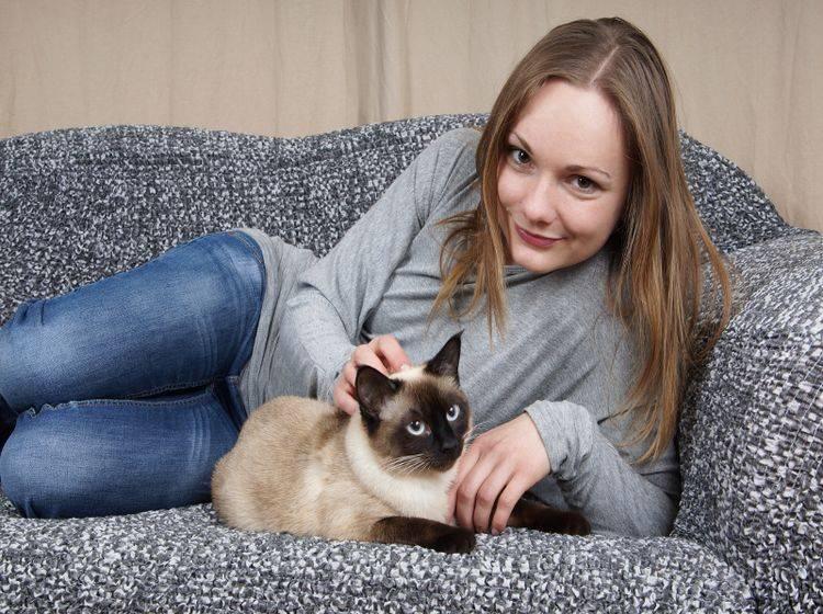 Anhängliche Katzenrassen wie die Siam weichen ihren Besitzern nicht von der Seite – Shutterstock / Axel Bueckert
