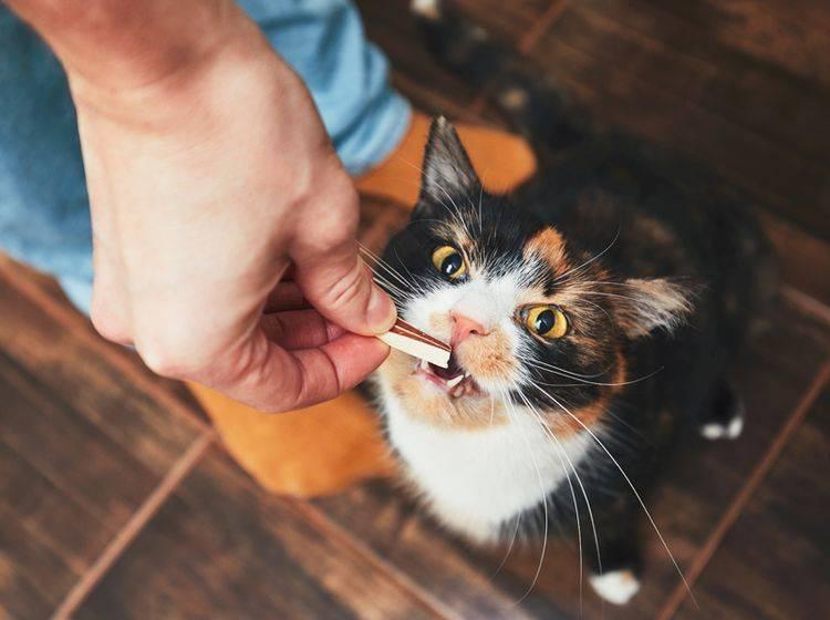 Das schmeckt! Wenn Sie ihr selbst gemachte Leckerli präsentieren, kann Ihre Katze sicher nicht widerstehen. Shutterstock/ Jaromir-Chalabala