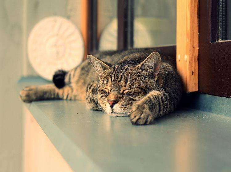 Damit es gar nicht erst zur Arthrose kommt, sollten Sie vorbeugen – Shutterstock / DavidTB