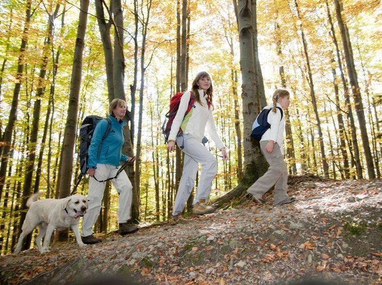 Durch Berg, Wald und Tal – Hunde lieben das Wandern – Shutterstock / gorillaimages