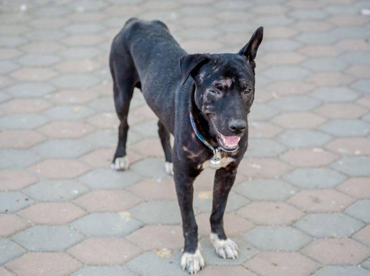Hunde können allmählich oder plötzlich erblinden – Shutterstock / hata99
