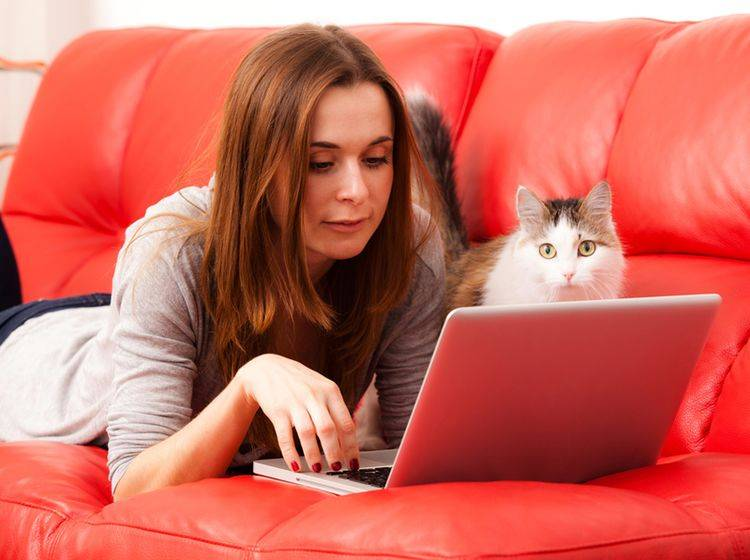 """""""So, genug gearbeitet! Ich will kuscheln!"""", findet diese Katze – Shutterstock / bullet74"""