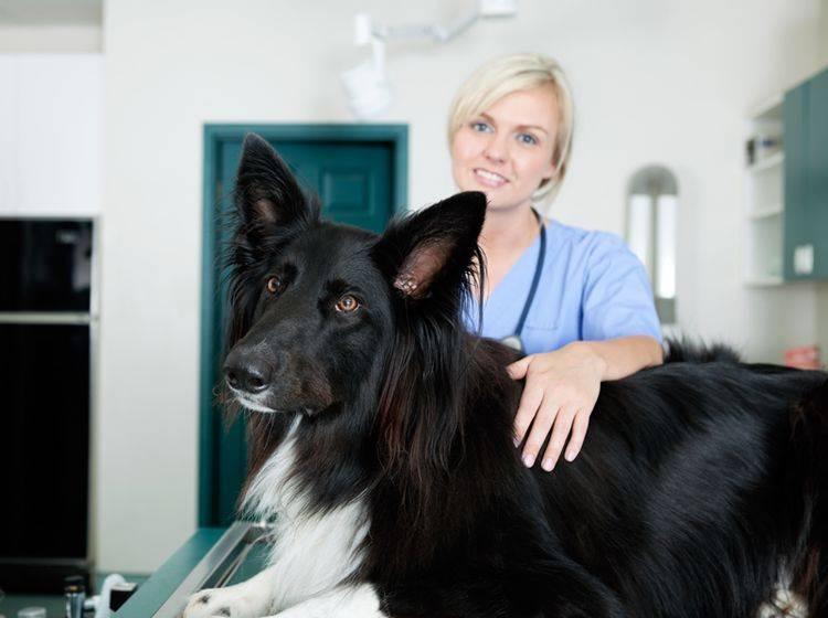 Chronische Blähungen sind ein Fall für den Tierarzt – Shutterstock / Tyler Olson
