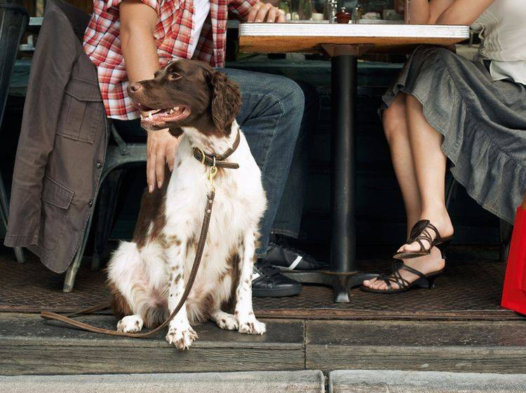 Dieser Hund weiß sich im Restaurant zu benehmen – Shutterstock / bikeriderlondon