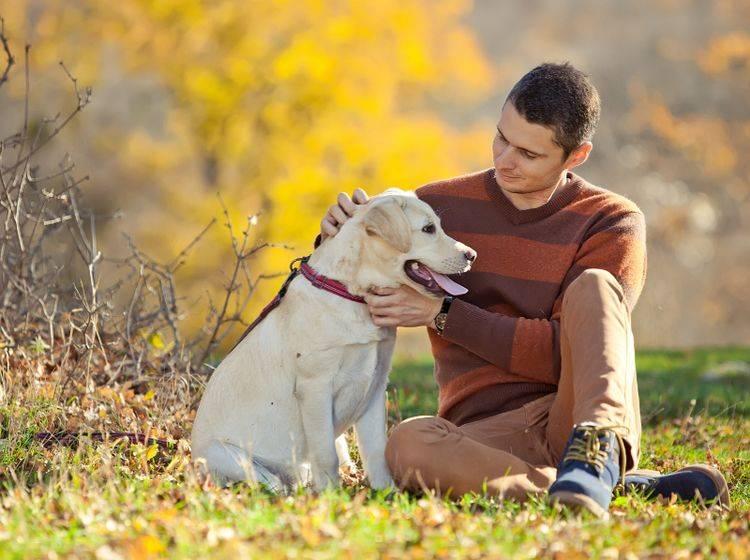 Ein Hund fühlt sich am wohlsten, wenn er Hund sein darf – Shutterstock / Nina Buday