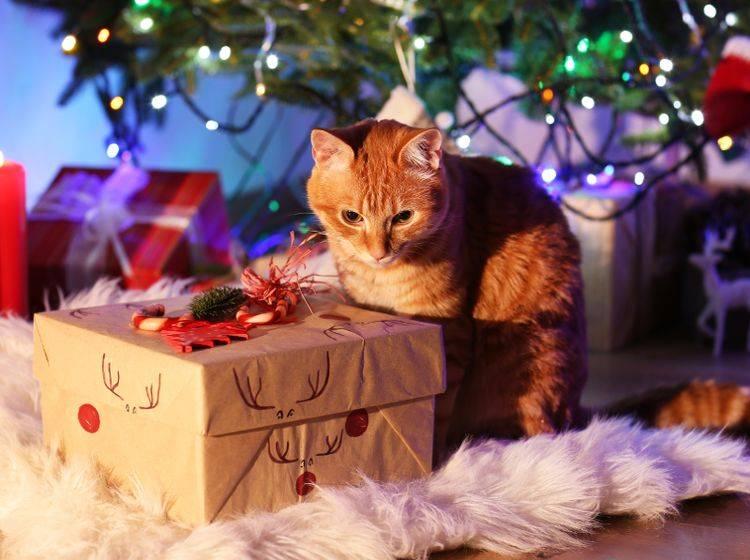Was ist da wohl drin? Bereits das Auspacken macht Haustieren viel Freude – Shutterstock / Africa Studio
