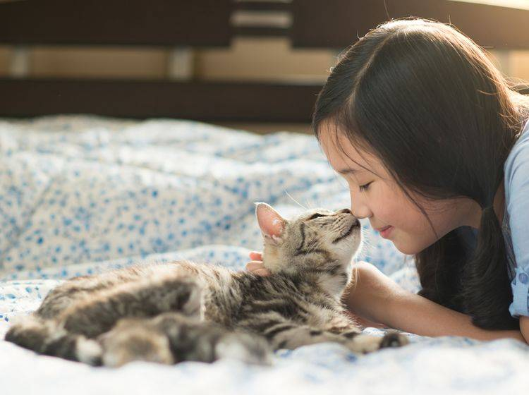 Gesucht und gefunden: Kätzchen kuschelt mit seinem Herzensmenschen – Shutterstock / ANURAK PONGPATIMET