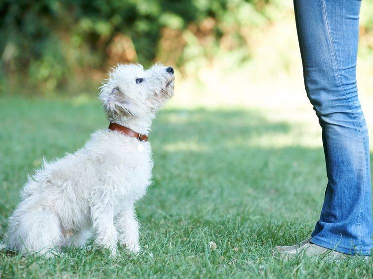 Beim Rally Obedience macht Gehorchen Spaß! – Shutterstock / SpeedKingz
