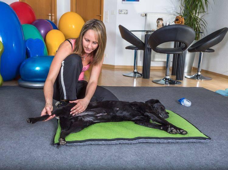 Dieser süße Hund genießt seine Massage – Shutterstock / msgrafixx