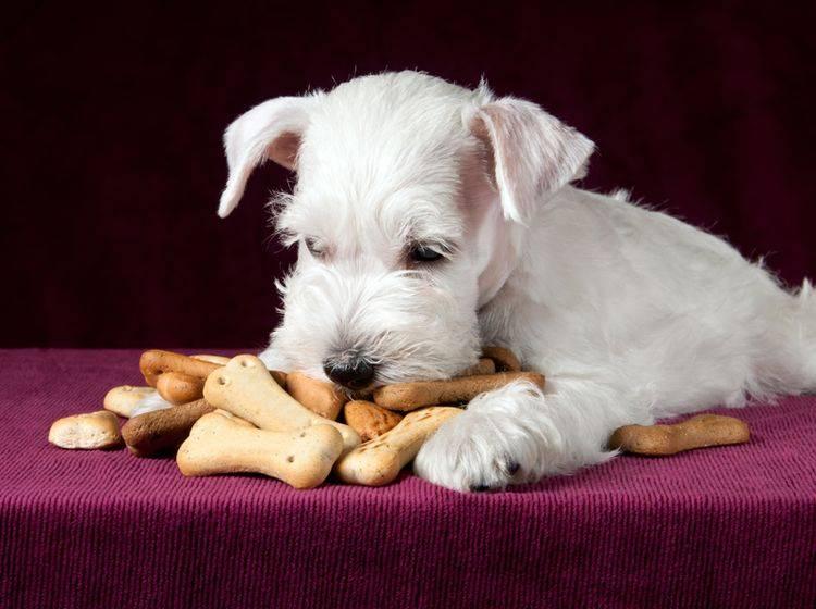 Selbst gebackene Hundeleckerli sind ein tolles Weihnachtsgeschenk – Shutterstock / Maximilian100