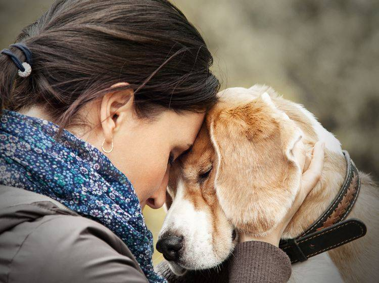 Nichts ist schöner, als den entlaufenen Hund wieder in die Arme zu schließen – Shutterstock / Soloviova Liudmyla