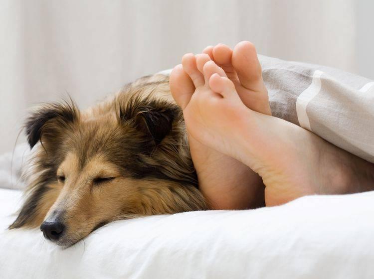 Viele Tierhalter finden, dass Haustiere im Bett sich positiv auf den Schlaf auswirken – Shutterstock / Kati-Molin