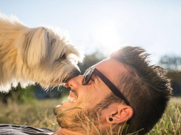 Erkannt! Hunde können Menschen auf verschiedene Arten und Weisen erkennen – Shutterstock / oneinchpunch
