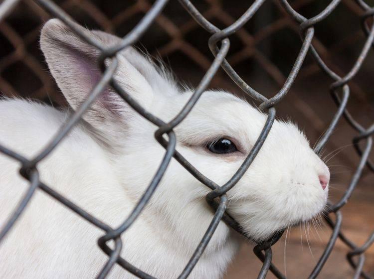 Einzelhaltung für Kaninchen in Käfigen ist laut PETA Tierquälerei – Shutterstuck / Iracha
