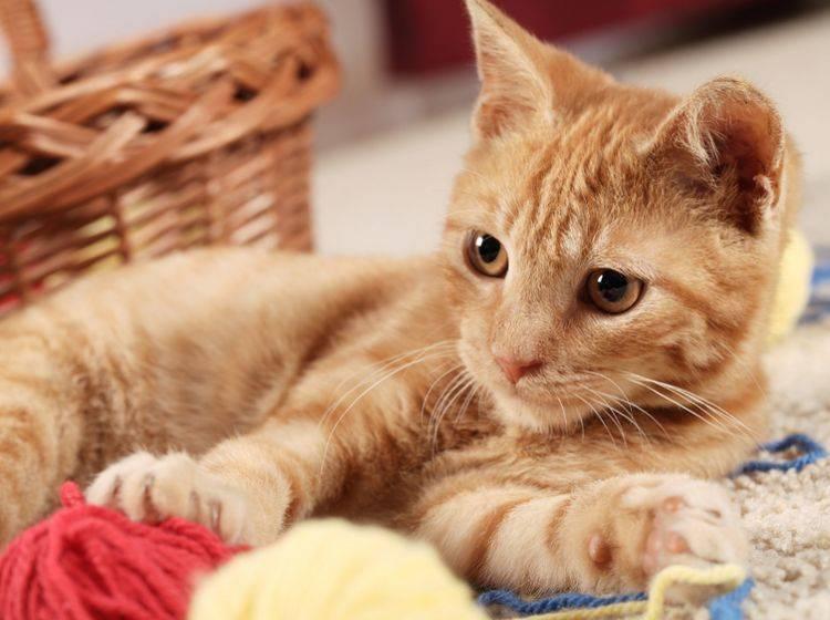 Ist die Katze glücklich, ist meistens auch der Mensch glücklich – Shutterstock / Magdalena Kucova