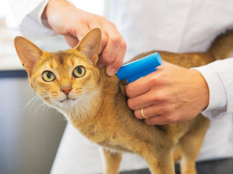 Den Chip setzt der Tierarzt, die Registrierung machen Sie selbst – Shutterstock / Ivonne Wierink