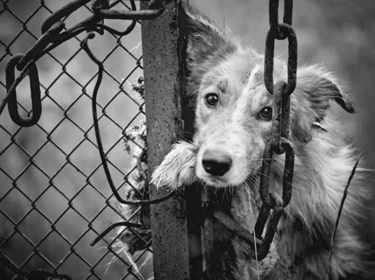 Wer bei Tierquälerei wegschaut, macht sich mitschuldig – Shutterstock / Ksenia Raykova