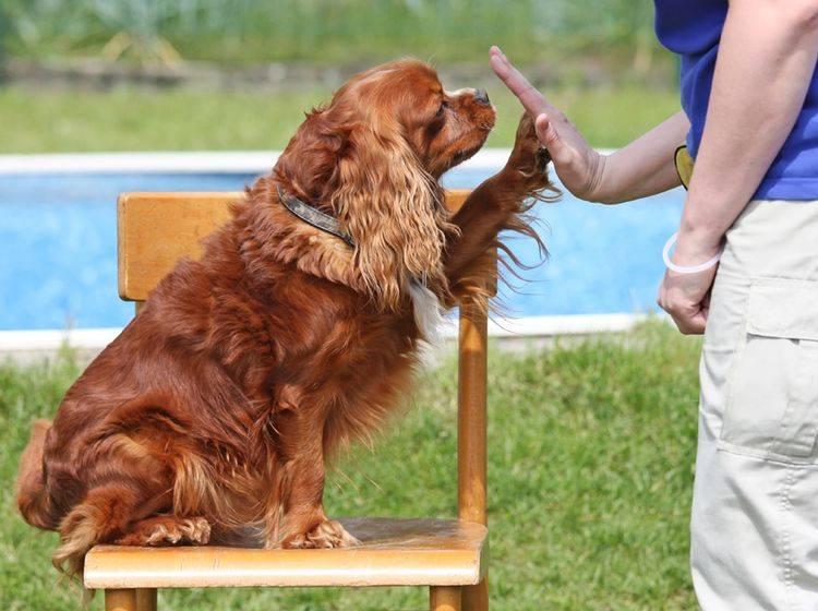 Mit Spiel und Spaß können Sie die Hundeintelligenz fördern – Shutterstock / Frank11