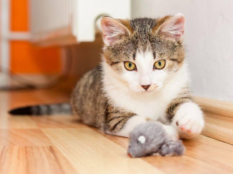 Das Spiel mit der Katze sollte immer spannend bleiben – Shutterstock / Xseon
