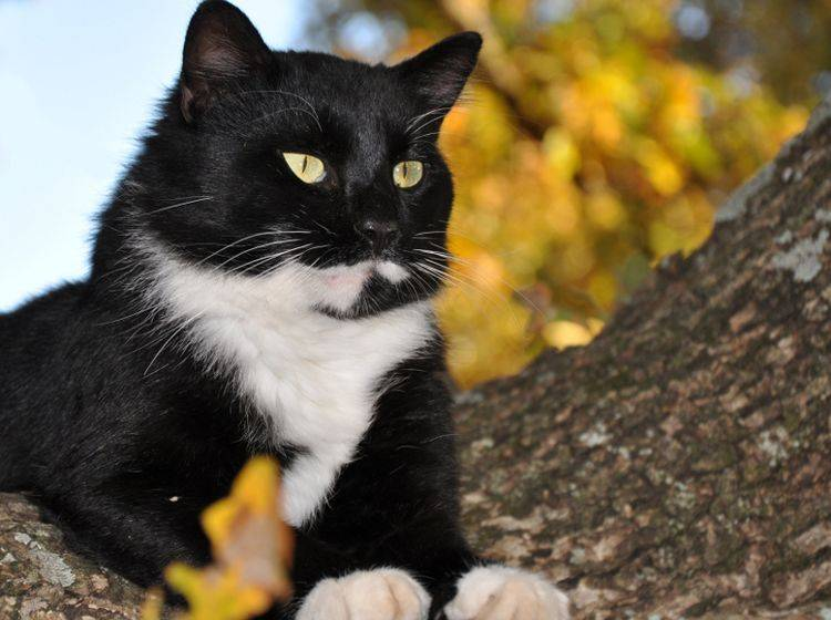 Warum kommen Katzen nicht so gut von Bäumen herunter? Es liegt an der Biegung ihrer Krallen – Shutterstock / Sari Oneal