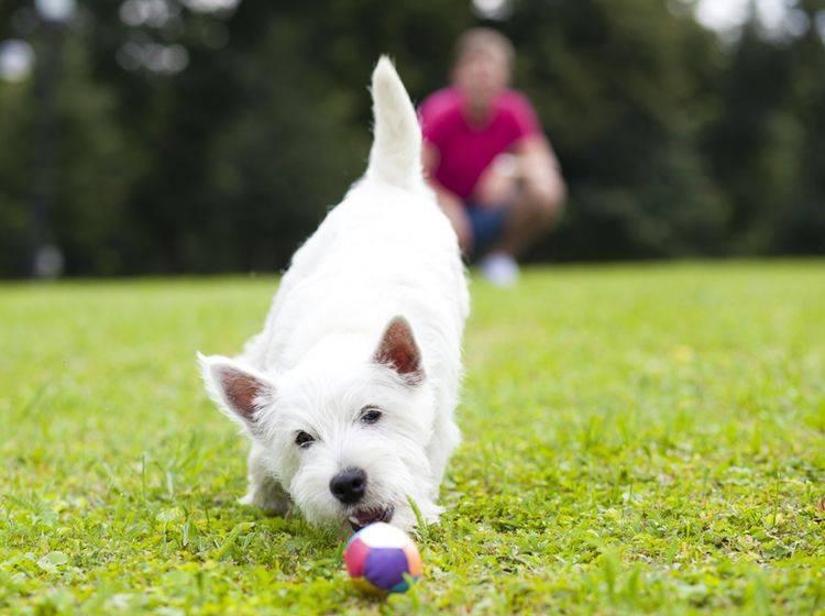Auf dem Hundespielplatz braucht der Hund keine Leine – Shutterstock / Andrey Arkusha
