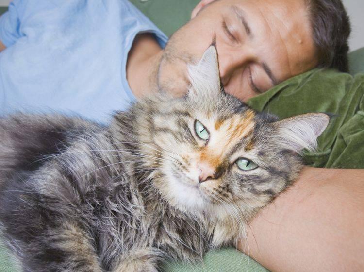 """""""Noch lasse ich ihn schlafen, aber gleich muss er mit mir spielen"""", könnte sich diese Katze denken – Shutterstock / Alex James Bramwell"""