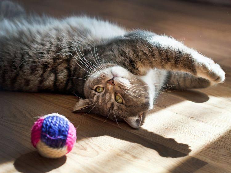 Spielzeuge – wie dieser Ball – sollten groß genug sein, damit Katzen sie nicht verschlucken können – Shutterstock / Tequiero