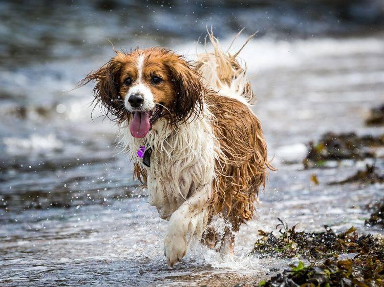 """""""Ich habe nur drei Beine – na und?"""", denkt sich dieser Wasserfreund und rennt weiter – Shutterstock / Daz-Stock"""