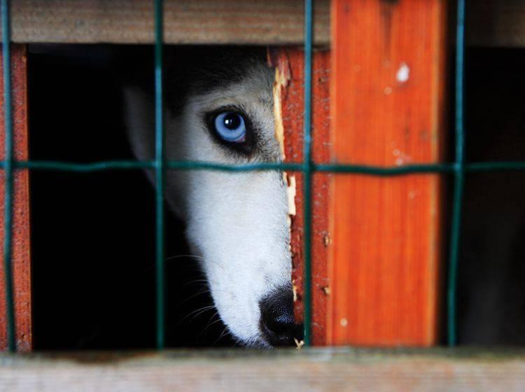 Wird Tierquälerei in den USA bald strenger verfolgt? – Shutterstock / Emka74