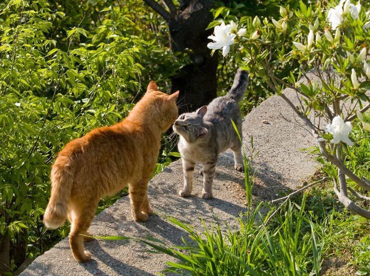 Zwei Katzen begegnen sich und beschnuppern sich freundlich – Shutterstock / Seiji