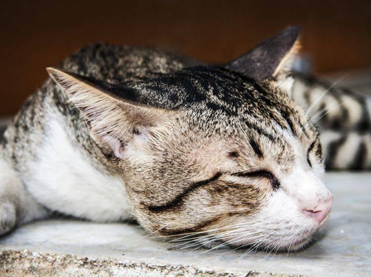 Was Versteht Man Unter Tabby Muster Bei Katzen