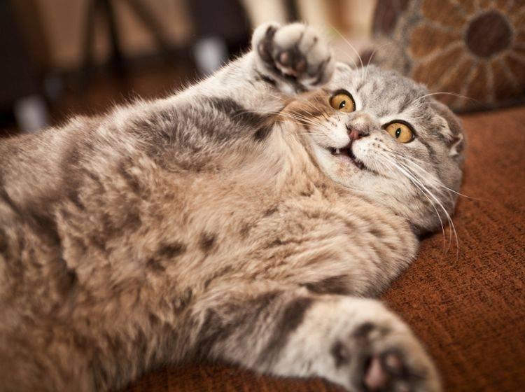 Wenn es mal wieder verrückt hergeht, müssen Sie sich keine Sorgen machen – Shutterstock / Andrey Tairov