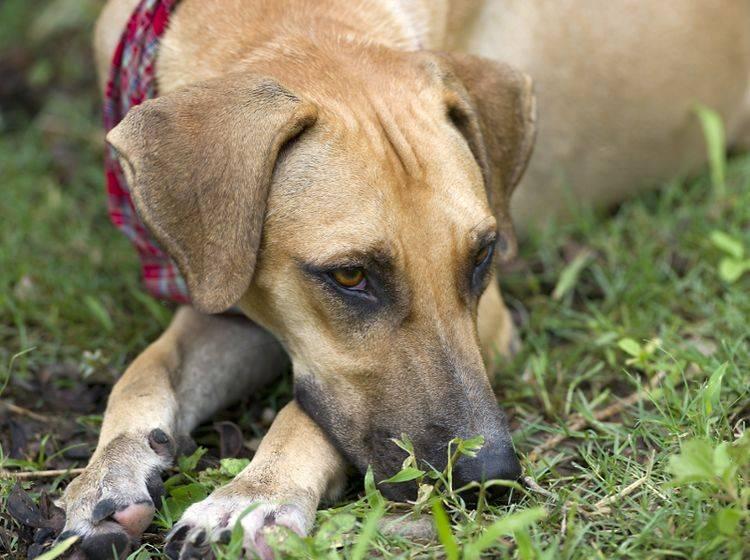 Hund entlaufen: Was muss ich tun? | Allianz