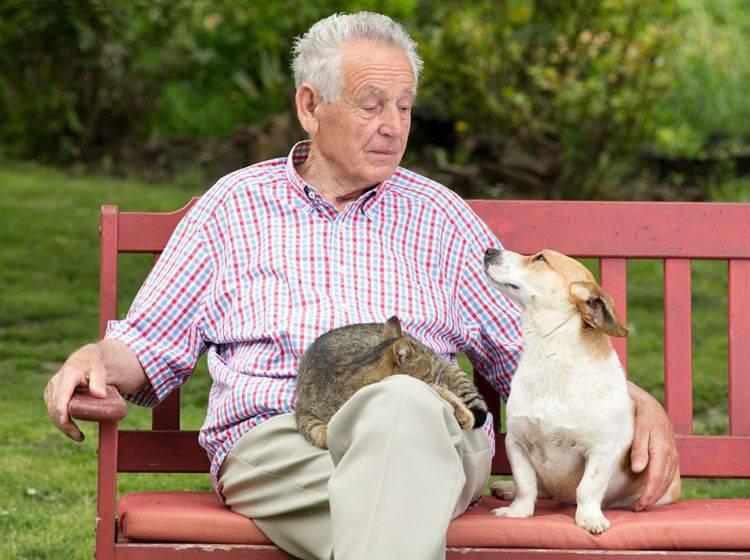 """""""Ich habe euch beide gleich lieb"""", denkt sich dieser ältere Herr mit seinen Haustieren – Shutterstock / Budimir Jevtic"""