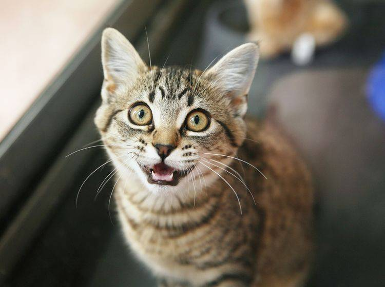 Wenn die Katze nachts viel weint oder miaut, fühlen sich ihre Lieblingsmenschen oft hilflos – Shutterstock / Sue McDonald