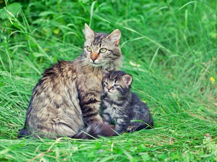 Frühlingszeit ist Kätzchenzeit: Süße Katzenmama mit ihrem Nachwuchs – Shutterstock / vvvita