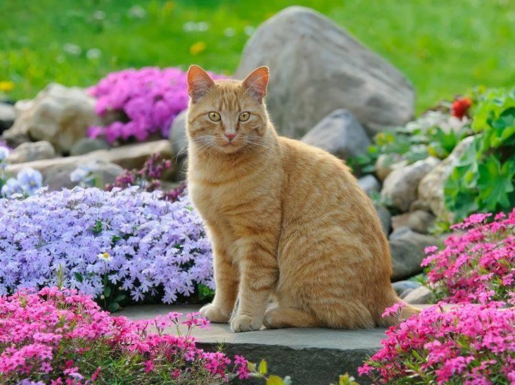 Damit Katzen den Frühling richtig genießen können, gilt es, einiges zu beachten – Shutterstock / Katho Menden