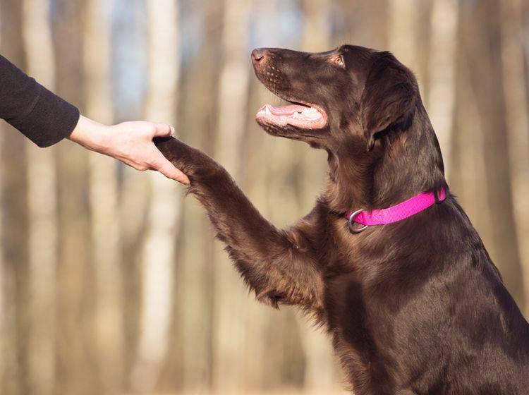 Ein wenig höfliche Distanz wissen Hunde bei der Begrüßung zu schätzen – Shutterstock / otsphoto