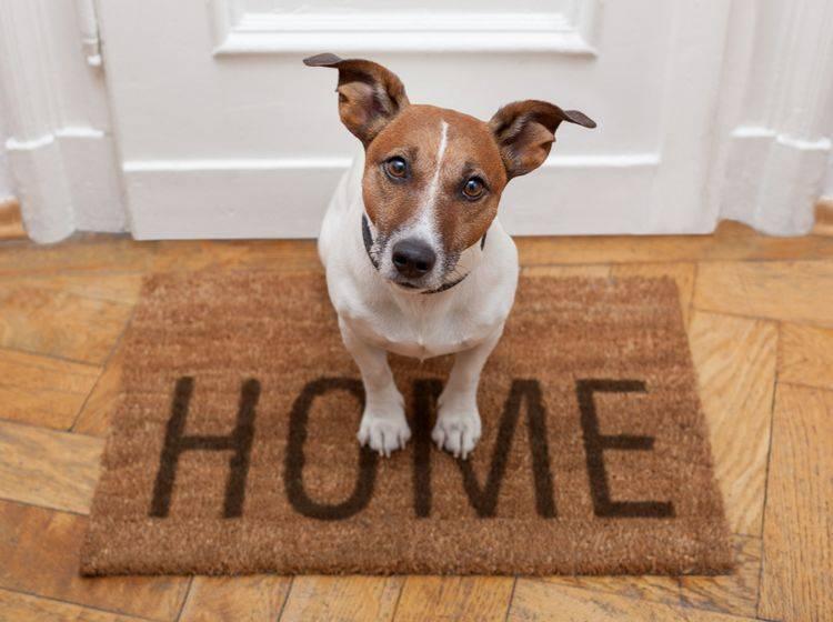 """""""Wie süß! Ein Hund!"""", denken viele, aber nicht alle. Besucher im Tierhaushalt sollten über Ängste und Unwohlsein sprechen – Shutterstock / Javier Brosch"""